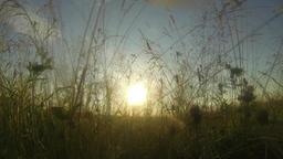 The morning sun grass Footage