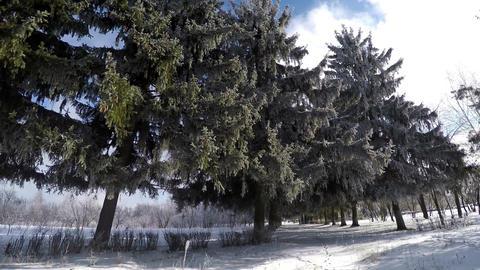 Winter Walk In The Botanical Garden 1 Footage