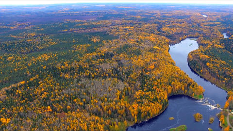 Autumn forest and river from a height. Aerial view GIF