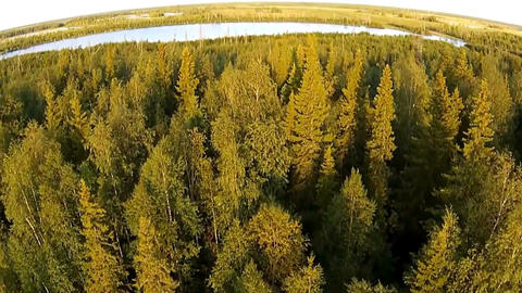 Aerial flight over the lake and forest Footage