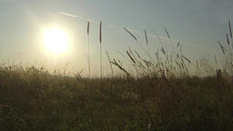 Field On A Background Of The Morning Sun Footage