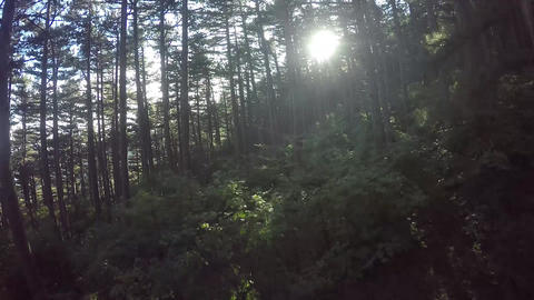 Aerial View Through the Forest. Flying over the beautiful forest trees. Aerial c