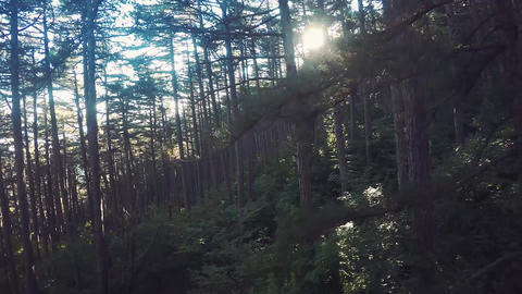 Aerial View Through the Forest. Flying over the beautiful forest trees. Aerial c Footage