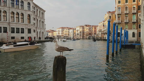 Venice, Italy a seagull standing on Grand Canal by passing boats Footage