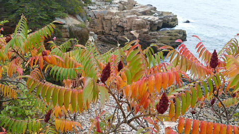 Autumn and colored leaves with ocean
