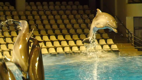 Few dolphins jumping over the water spray slow motion Footage