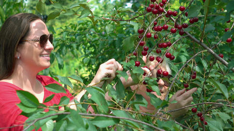 Video of mother and daughter picking cherry fruit in 4K Footage