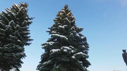 Walk around the pine tree at city covered with snow Footage