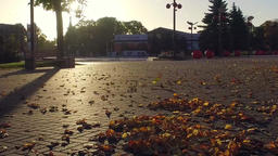 Low-angle camera moving across city street covered of autumn leaves. Slow motion Footage