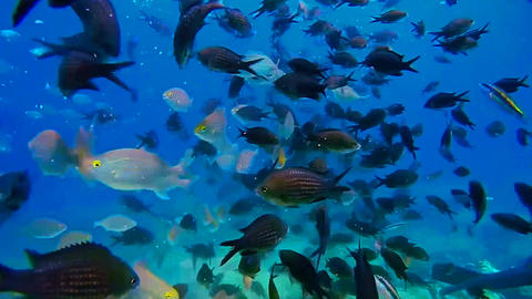 school of fish swims in the sea Filmmaterial