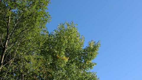 Trees in autumn on a background of blue sky Footage