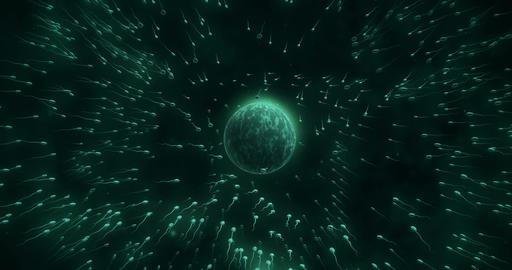 Many sperms surrounding egg V2 Animation