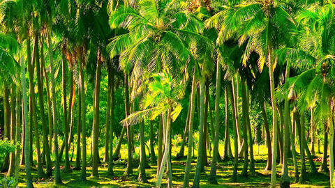 Exotic trees with green leaves swaying in wind in sunny summer day Footage