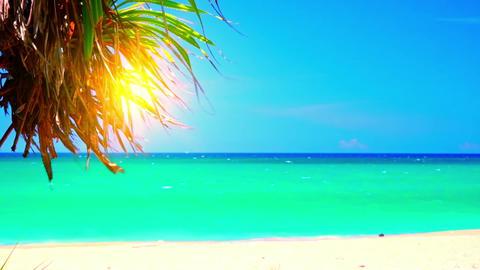 Idyllic landscape with azure sea washing shore covered by white sand Footage