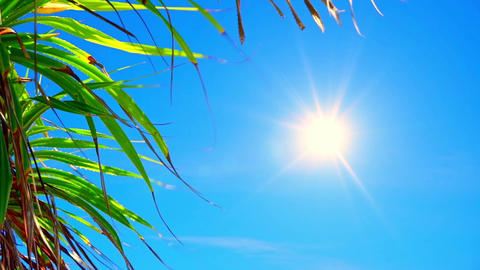 Bright sun shining in clear blue sky in summer day and foliage of tropical palm Footage