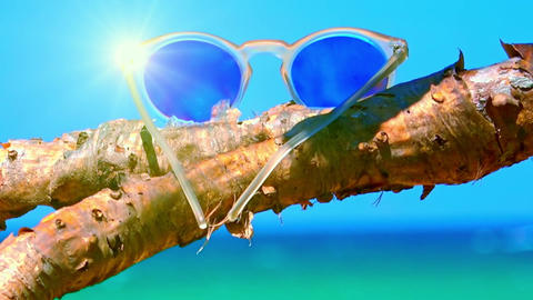 Stylish sunglasses lying on dried palm tree branch. Tropical paradise concept Footage