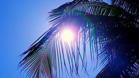 Sunlight breaking through palm foliage swaying in breeze Footage