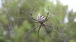 Europe Spain Balearic Ibiza coves and landscapes 063 big exotic spider Footage