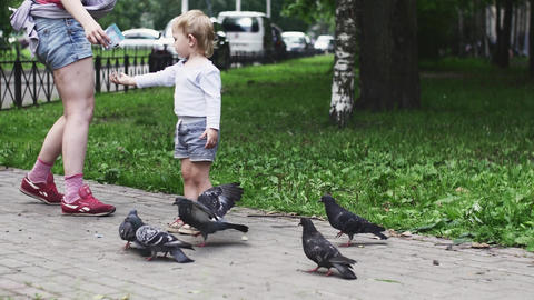 Little boy feeding doves by sunflower seeds in summer park. Mother. Walking Footage