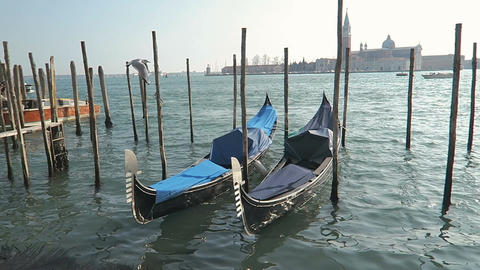 Venice, Italy docked empty gondolas on wooden mooring piles Live Action