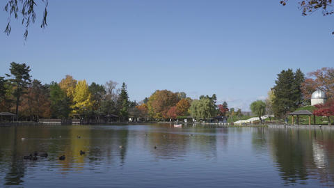 Japanese park in autumn Filmmaterial