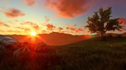 Tree of life on a green meadow, beautiful sunset Animation