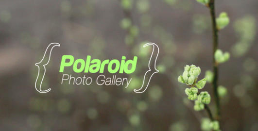 Spring Photo Gallery After Effects Template