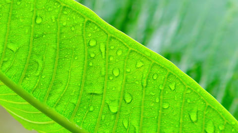 Rainy season in tropics. Plants wet after rain in Indonesian jungles Footage