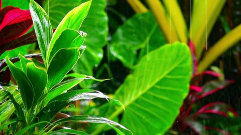 Wet season in tropics. Amazing plants and flowers in fantasy garden Footage