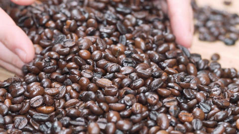 Picking roasted coffee beans, with hands Footage
