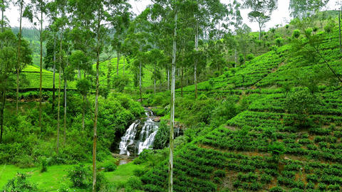 Small streaming waterfall at tea plantations in Sri Lanka Footage