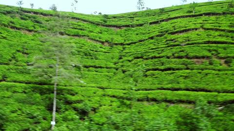 Tea plantations landscape panning view. Sri Lanka traditional agriculture Footage