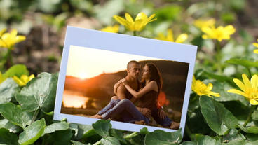 Flowers Photo Gallery After Effects Project