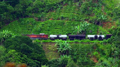 Train passes through Sri Lanka mountain landscape surrounded by tea plantations Footage