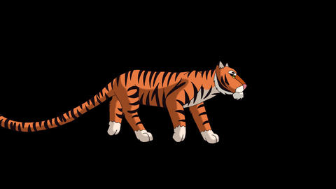 Tiger Walks. Animated Motion Graphic with Alpha Channel Animation