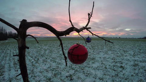 dry tree on field with two Christmas bauble toy and wind, time lapse 4K Footage