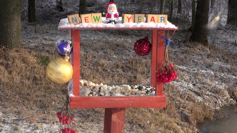 Christmas New Year decorated bird feeder and hungry wild birds Live Action