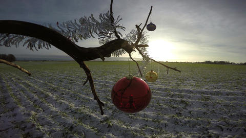 tree branch on field with Christmas bauble and sunrise, 4K Footage