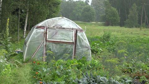 Summer rain in garden on plastic primitive greenhouse, 4K Live Action