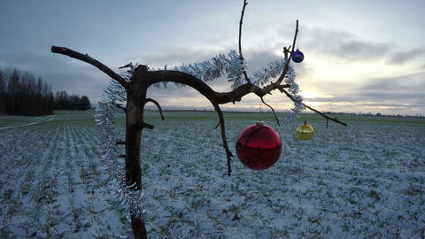 tree branch on field with Christmas bauble and sunrise, time lapse 4K Footage