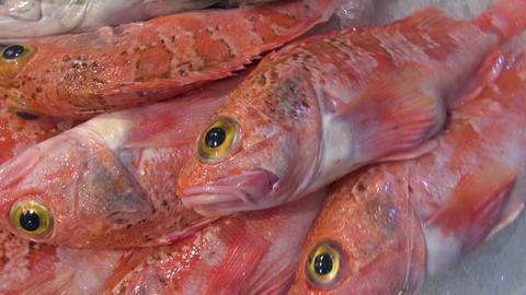 fresh ocean fish in spanish market Footage