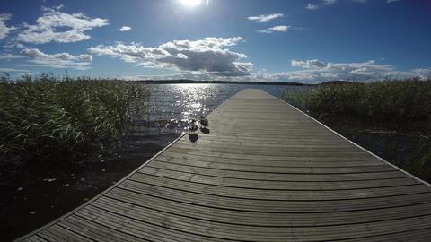 Footbridge into lake with two ducks on it, 4K Footage