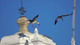 Storks 0