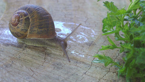 Snail on a tree trunk Filmmaterial