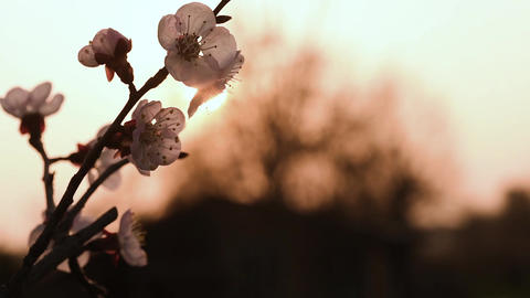 Spring blossom close up in slow motion 이미지