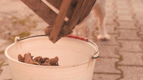 Peasant woman pours wooden crate with potatoes in plastic bucket ビデオ