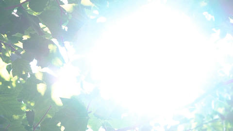 Tree Flare Sun Shine Image