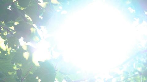 Tree Flare Sun Shine