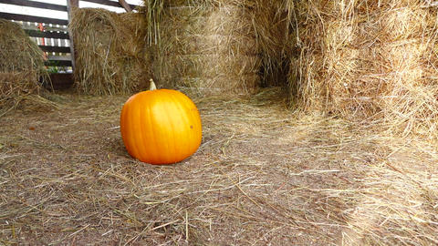 Good matured pumpkin roll over dry grass at hayloft and stop, slow motion shot Footage