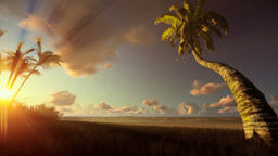 Tropical landscape, palm trees blowing in the wind at sunrise Animation